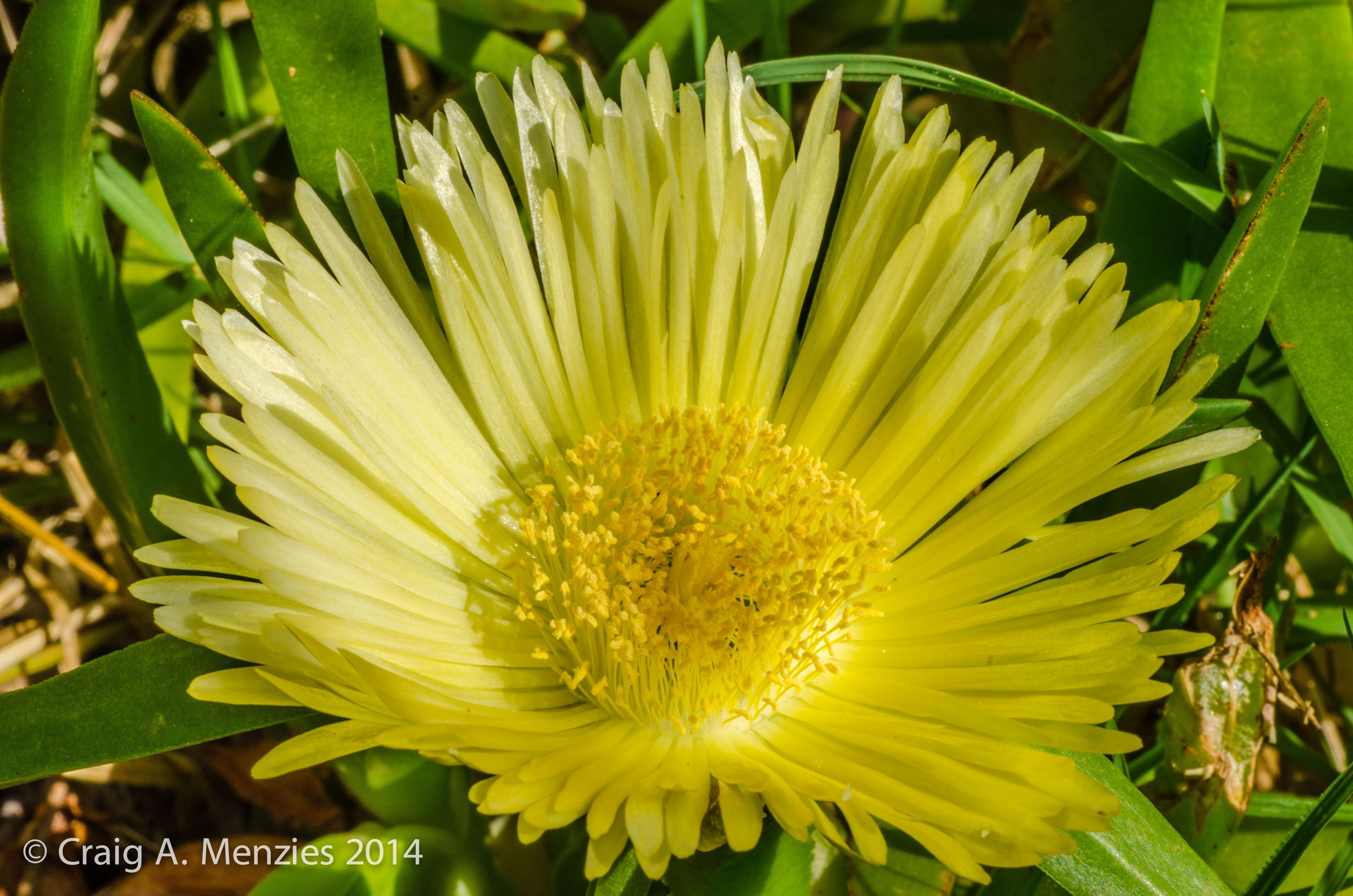 Floral-Gold