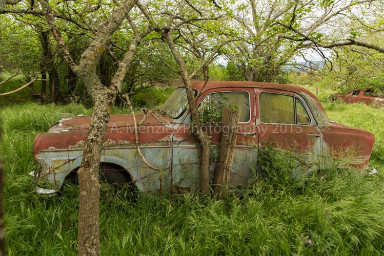 Austin-A50-Left-for-Dead